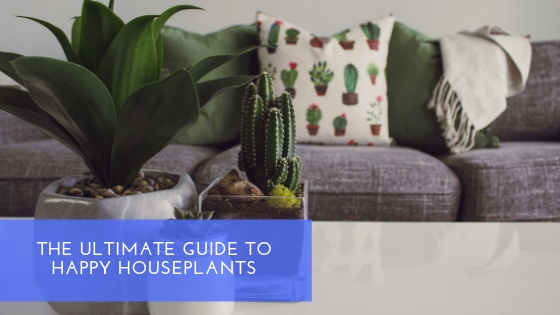 SHH - Ultimate Guide to Houseplants
